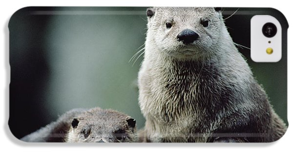 North American River Otter Lontra IPhone 5c Case by Gerry Ellis
