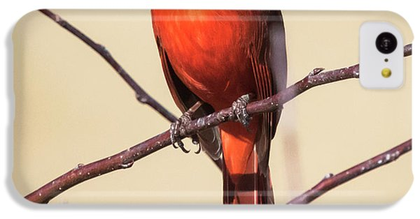 Northern Cardinal Profile IPhone 5c Case by Ricky L Jones