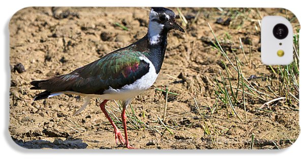 Northern Lapwing IPhone 5c Case by Louise Heusinkveld