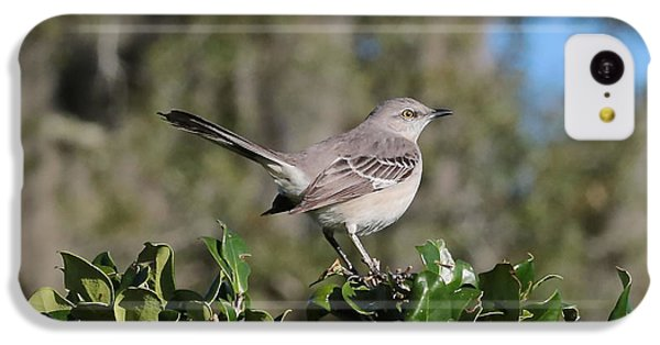 Northern Mockingbird IPhone 5c Case by Carol Groenen