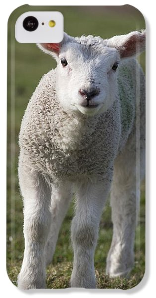 Sheep iPhone 5c Case - Northumberland, England A White Lamb by John Short