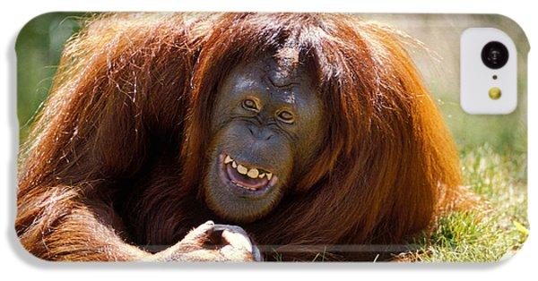 Orangutan In The Grass IPhone 5c Case