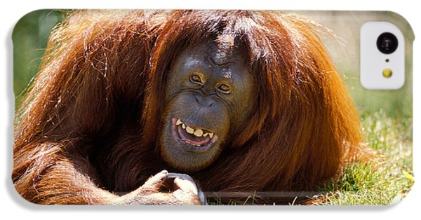 Orangutan In The Grass IPhone 5c Case by Garry Gay