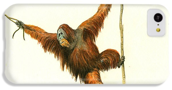 Orangutan IPhone 5c Case by Juan Bosco