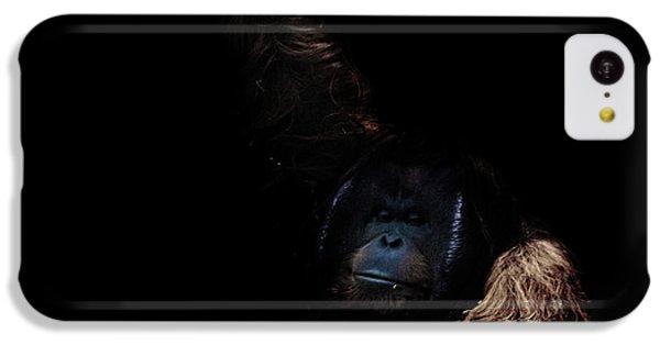 Orangutan IPhone 5c Case