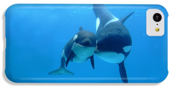 Orca Orcinus Orca Mother And Newborn IPhone 5c Case by Hiroya Minakuchi