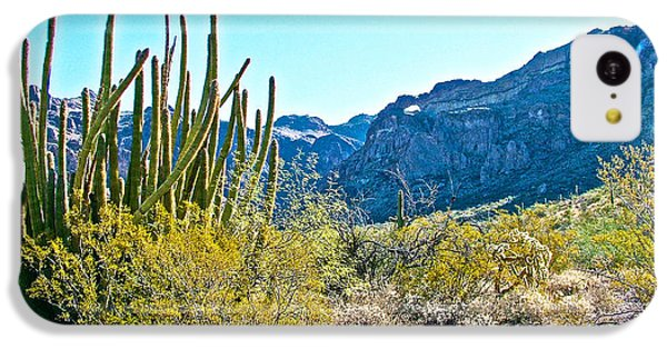 Organ Pipe Cactus In Arch Canyon In Organ Pipe Cactus National Monument-arizona  IPhone 5c Case by Ruth Hager
