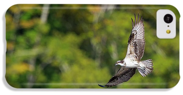 Osprey IPhone 5c Case by Bill Wakeley