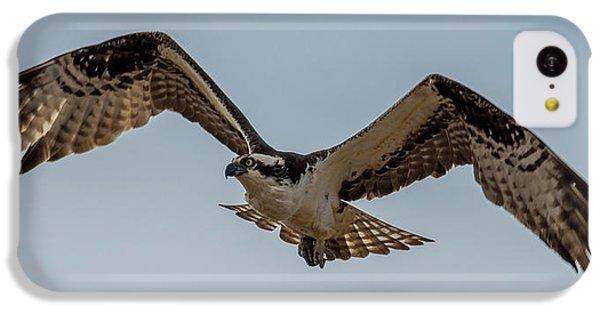 Osprey Flying IPhone 5c Case by Paul Freidlund