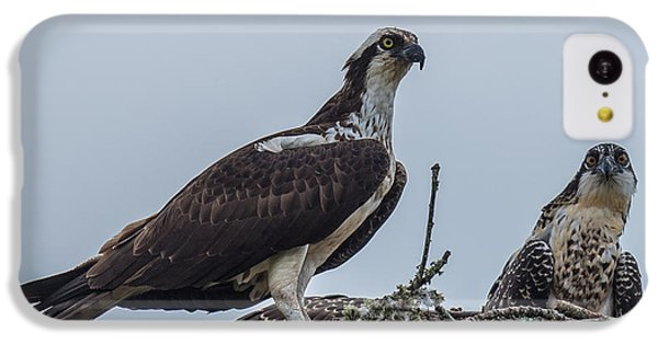 Osprey On A Nest IPhone 5c Case by Paul Freidlund