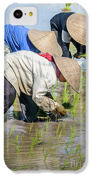 Paddy Field 2 IPhone 5c Case by Werner Padarin