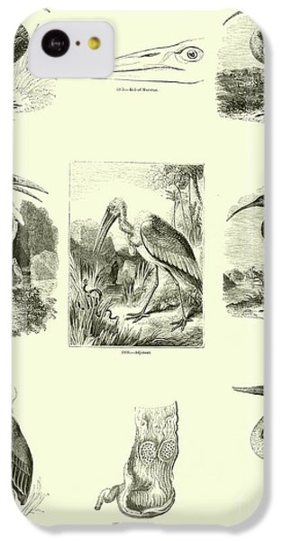 Page From The Pictorial Museum Of Animated Nature  IPhone 5c Case