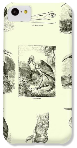 Page From The Pictorial Museum Of Animated Nature  IPhone 5c Case by English School