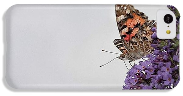 iPhone 5c Case - Painted Lady (vanessa Cardui) by John Edwards