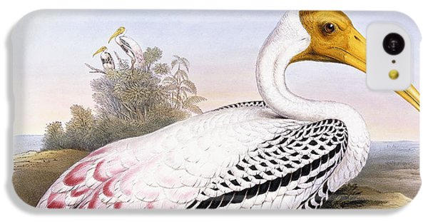 Painted Stork IPhone 5c Case by John Gould