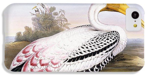 Painted Stork IPhone 5c Case