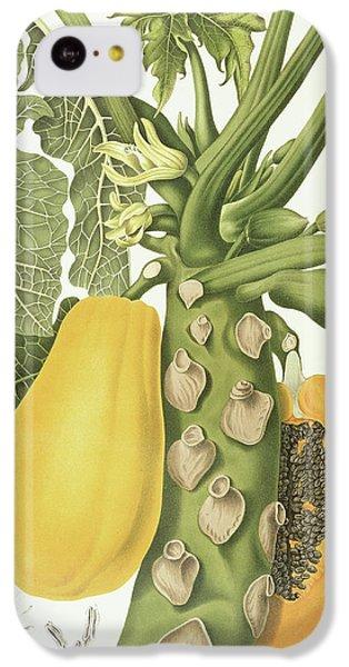 Papaya IPhone 5c Case