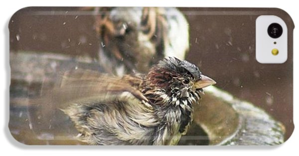 iPhone 5c Case - Pass The Towel Please: A House Sparrow by John Edwards