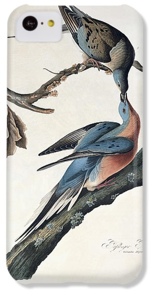 Pigeon iPhone 5c Case - Passenger Pigeon by John James Audubon