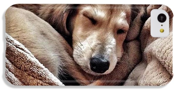Peace At Last #saluki IPhone 5c Case by John Edwards