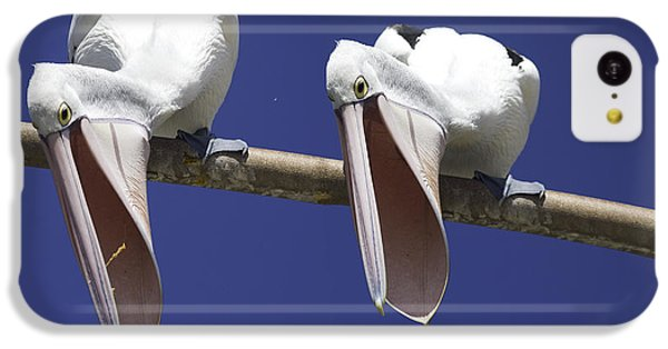 Pelican Burp IPhone 5c Case by Avalon Fine Art Photography