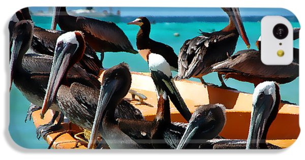 Pelican iPhone 5c Case - Pelicans On A Boat by Bibi Rojas