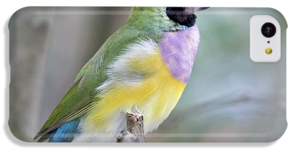 Finch iPhone 5c Case - Perched Gouldian Finch by Glennis Siverson