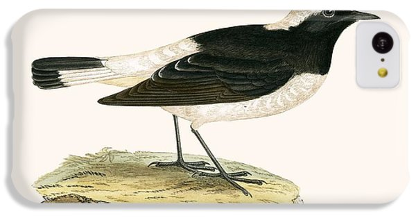 Flycatcher iPhone 5c Case - Pied Wheatear by English School