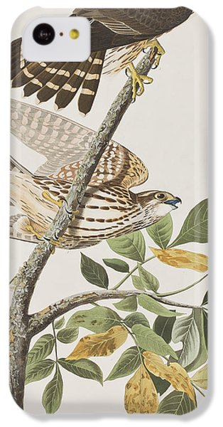 Pigeon Hawk IPhone 5c Case by John James Audubon
