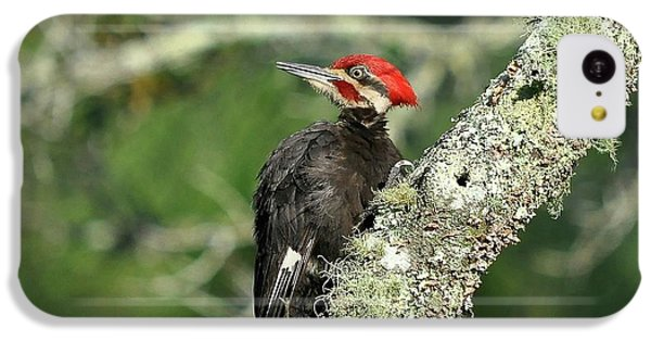 Pileated Perch IPhone 5c Case by Al Powell Photography USA