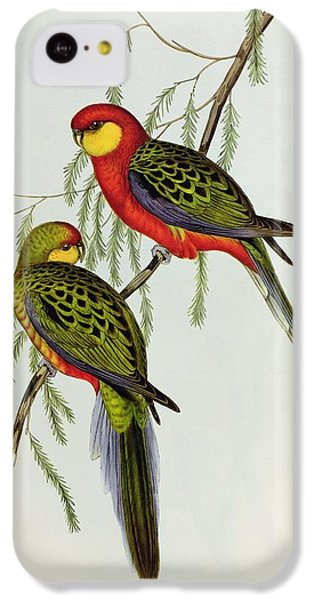 Platycercus Icterotis IPhone 5c Case