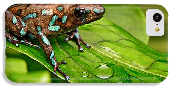 poison art frog Panama IPhone 5c Case by Dirk Ercken