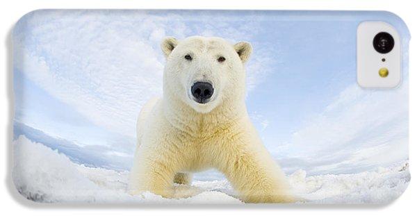 Polar Bear  Ursus Maritimus , Curious IPhone 5c Case by Steven Kazlowski