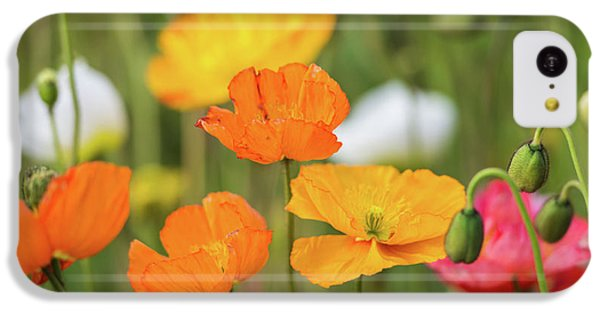 IPhone 5c Case featuring the photograph  Poppies 1 by Werner Padarin