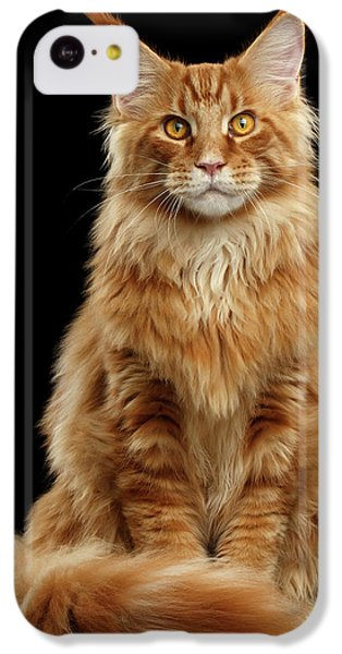 Cat iPhone 5c Case - Portrait Of Ginger Maine Coon Cat Isolated On Black Background by Sergey Taran