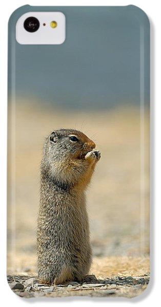 Prairie Dog IPhone 5c Case by Sebastian Musial