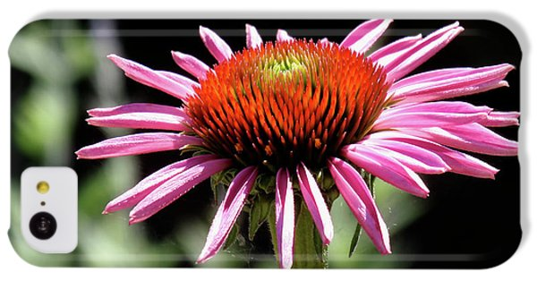 Pretty Pink Coneflower IPhone 5c Case
