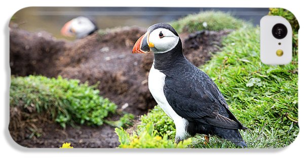 Puffin  IPhone 5c Case