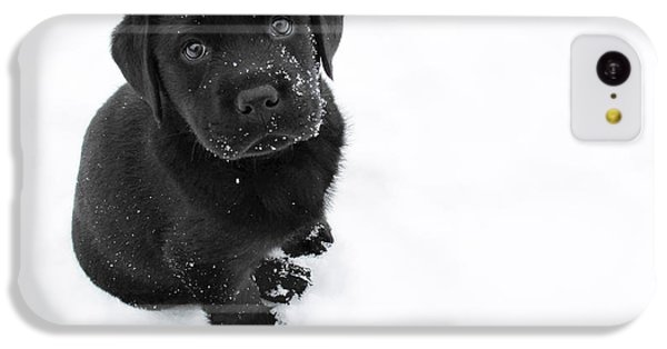 Dog iPhone 5c Case - Puppy In The Snow by Larry Marshall