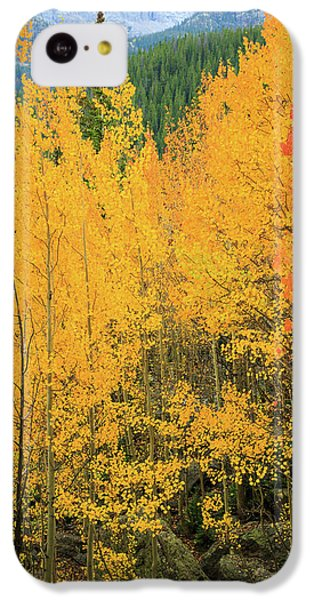Pure Gold IPhone 5c Case by David Chandler
