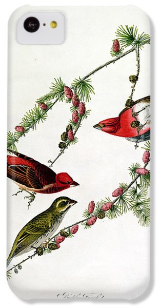 Finch iPhone 5c Case - Purple Finch by John James Audubon