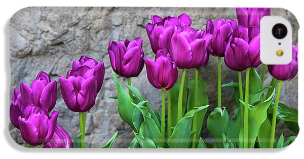 Tulip iPhone 5c Case - Purple Tulips by Tom Mc Nemar