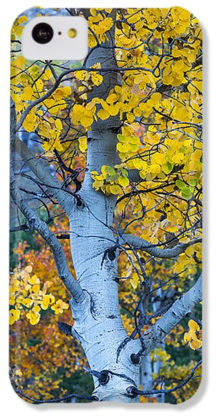 Quaking Aspen IPhone 5c Case
