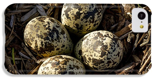 Killdeer iPhone 5c Case - Quartet Of Killdeer Eggs By Jean Noren by Jean Noren