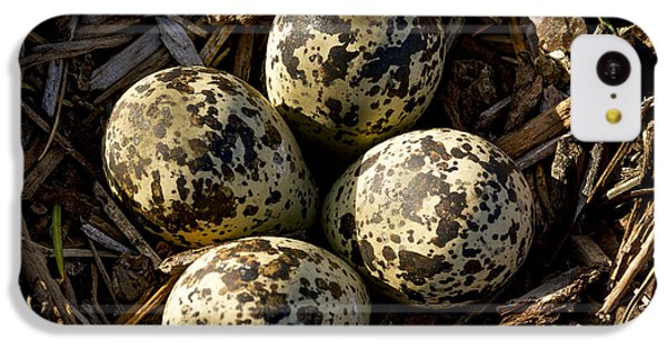Quartet Of Killdeer Eggs By Jean Noren IPhone 5c Case by Jean Noren