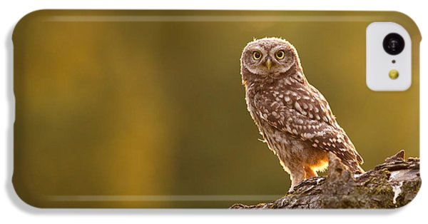 Qui, Moi? Little Owlet In Warm Light IPhone 5c Case by Roeselien Raimond