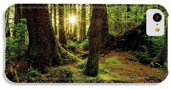 Sunset iPhone 5c Case - Rainforest Path by Chad Dutson