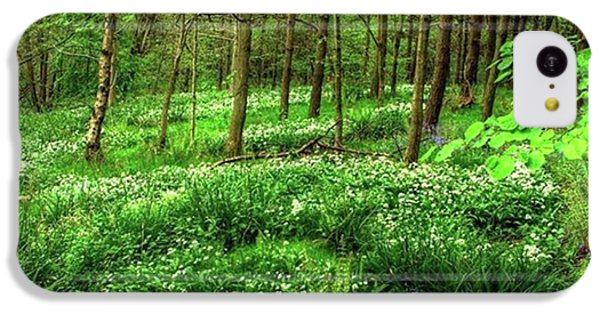 Ramsons And Bluebells, Bentley Woods IPhone 5c Case