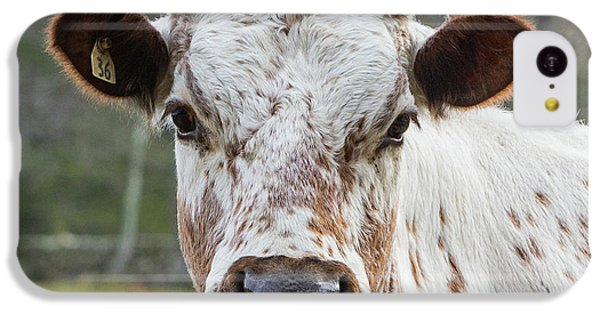 IPhone 5c Case featuring the photograph Randall Cow by Bill Wakeley