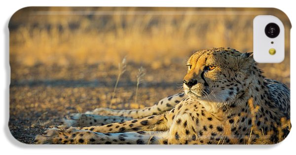 Reclining Cheetah IPhone 5c Case